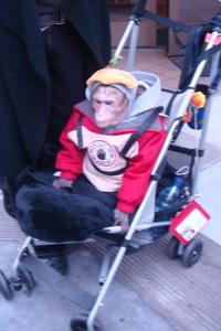 Monkey_in_stroller_2